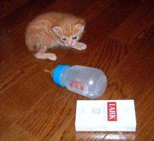 猫と哺乳瓶