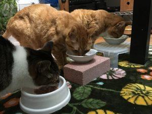 cat_eat