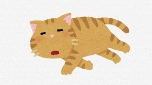 cat_20201121