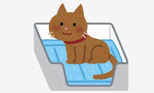cat_Piss